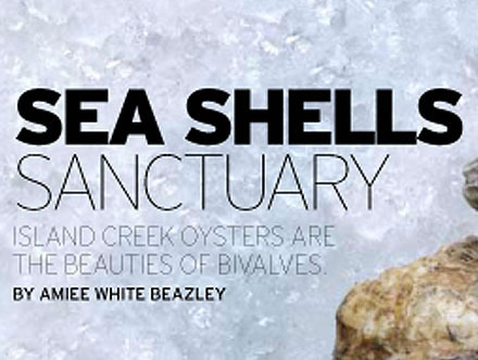 Sea Shells Sanctuary